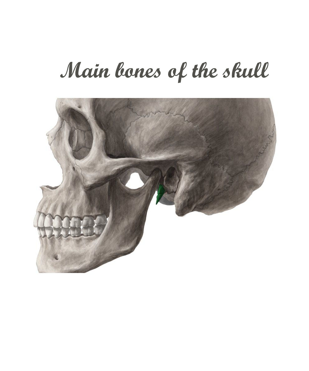 Main Bones of the Skull